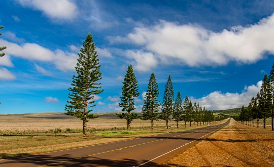 On the road to Lanai City | Pono Images