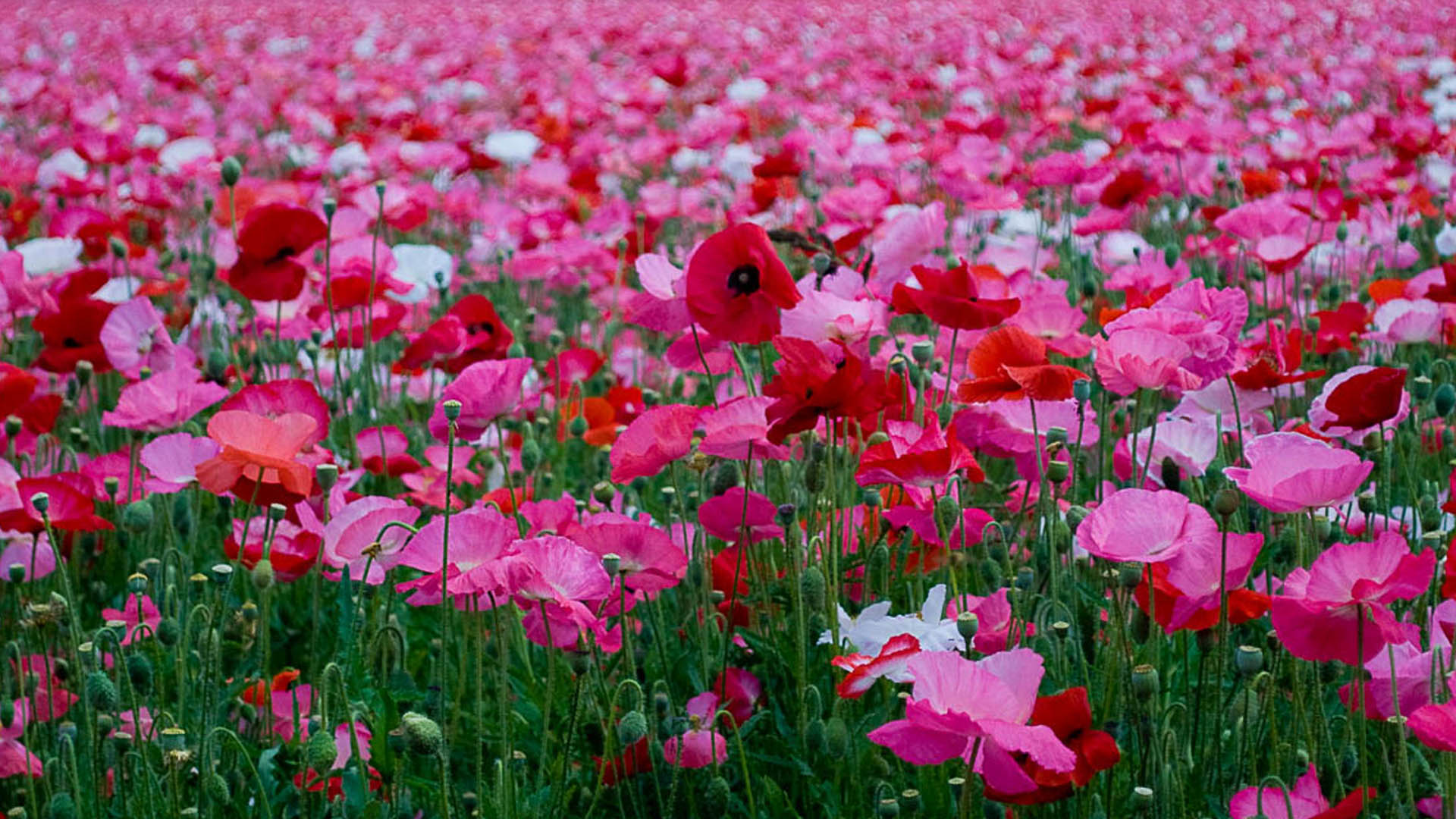 Flowers Gallery Background