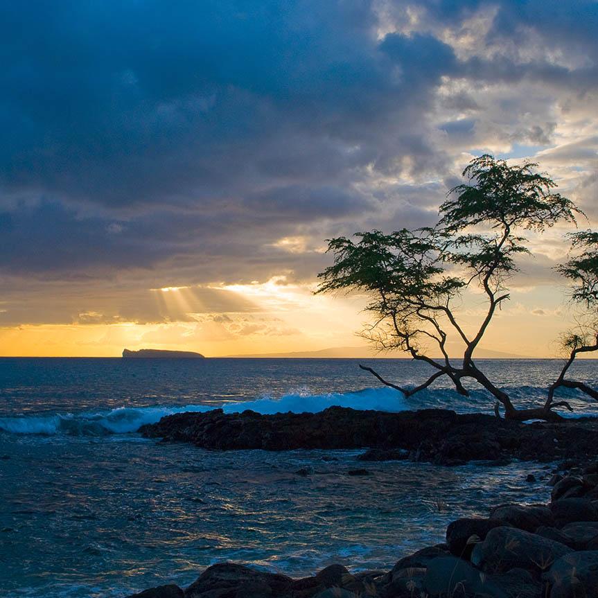 Hawai'i Gallery