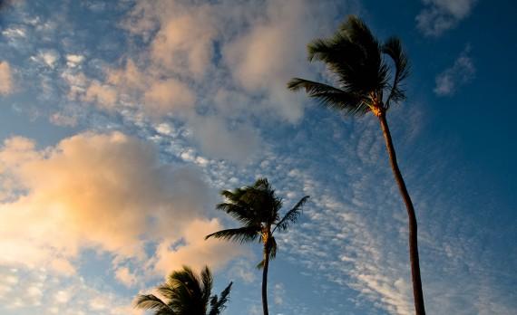 Sunset Palms - Kahana, Maui, Hawai'I | Pono Images