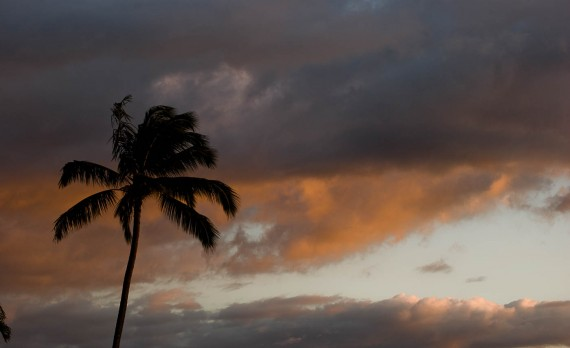 Sunset Palm - Kuleana Resort, Maui | Pono Images