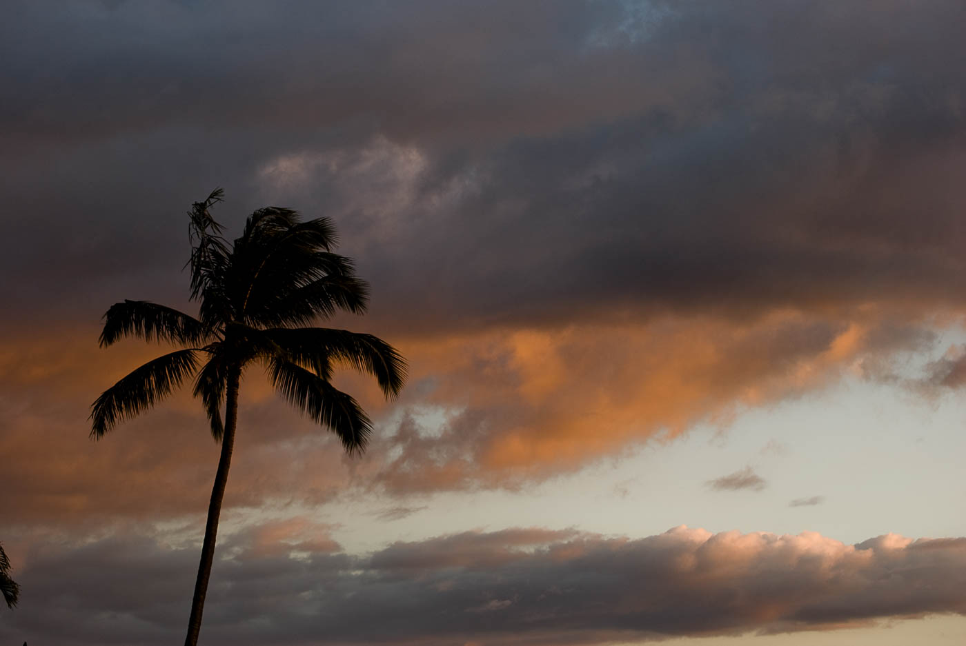 Sunset Palm - Kuleana Resort, Maui | Pono Images