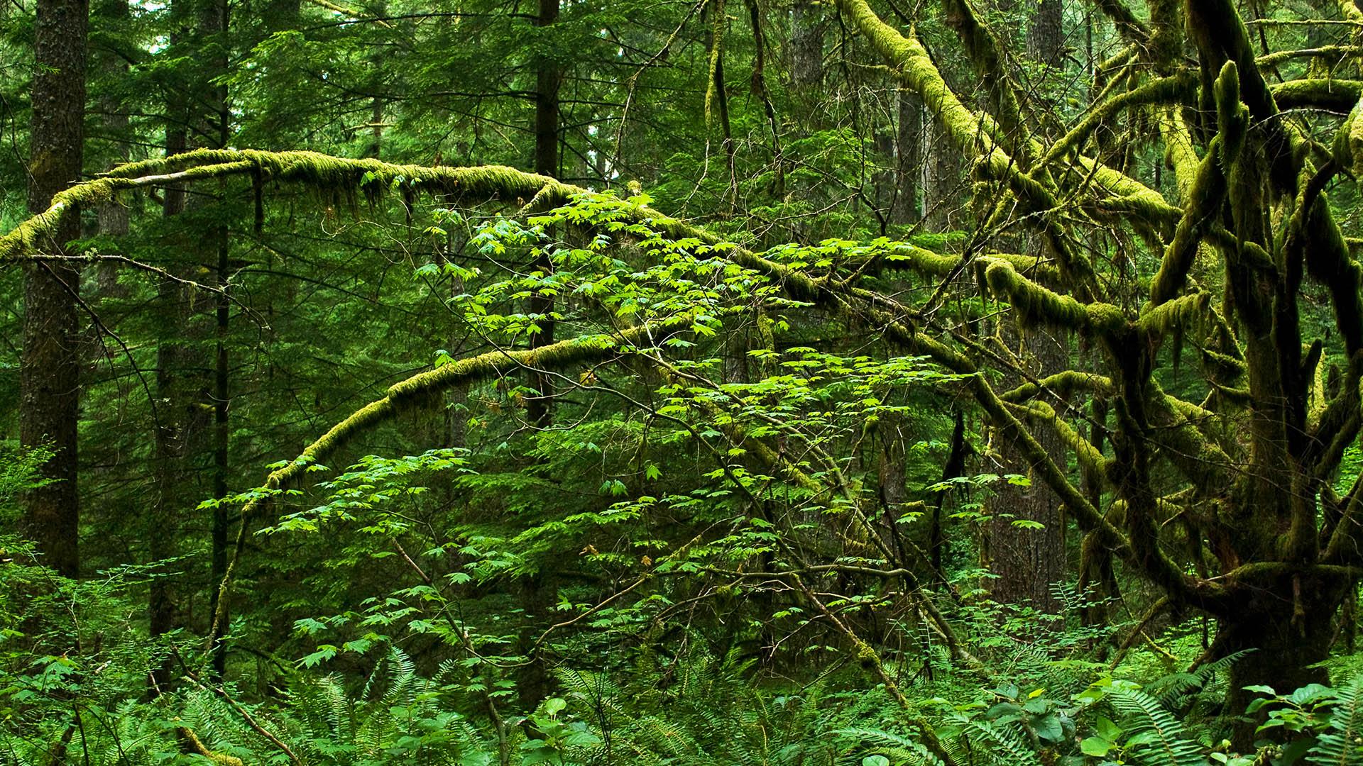 Rainforest Gallery Background