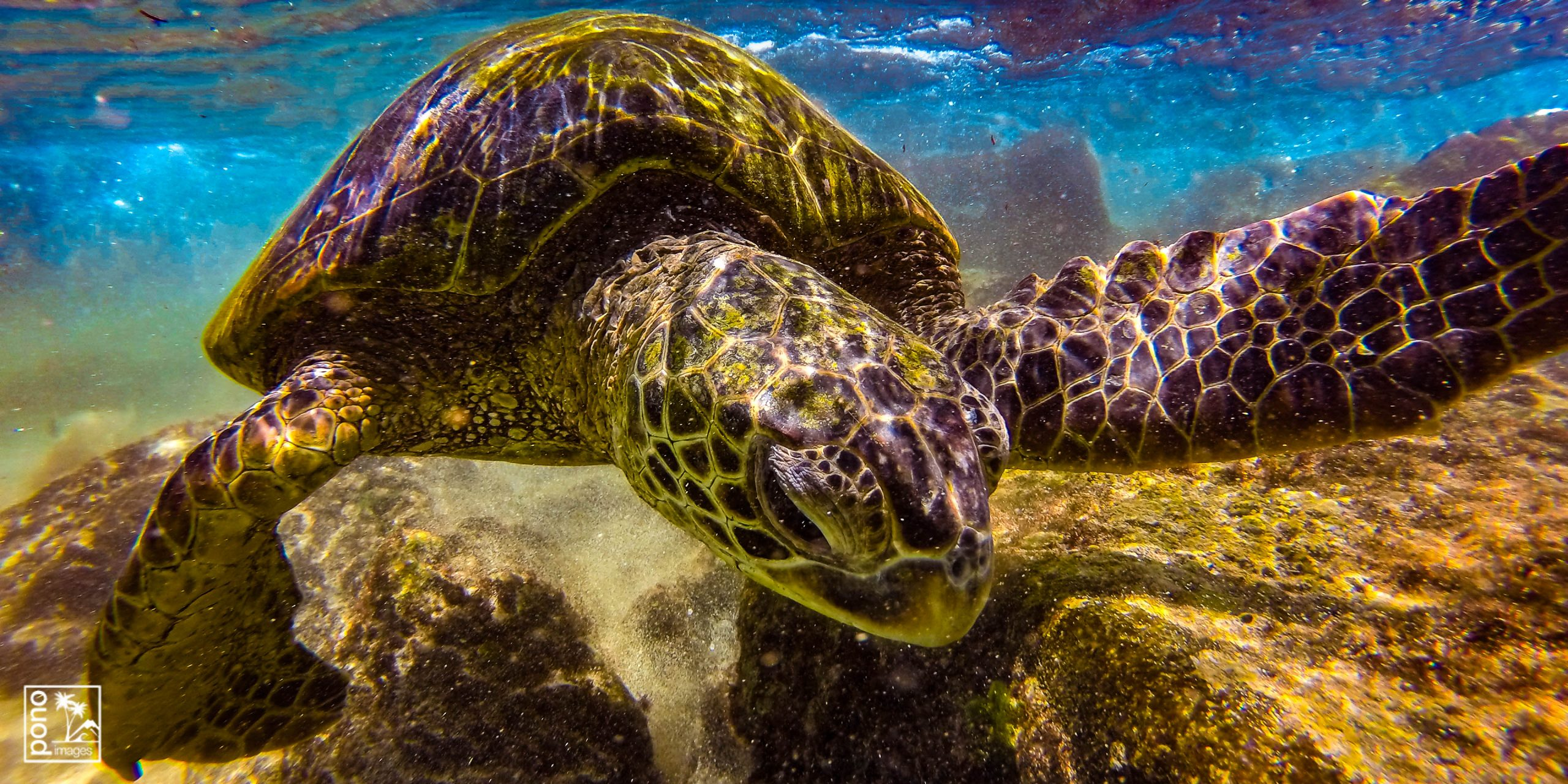 Exploring Honu by Pono Images