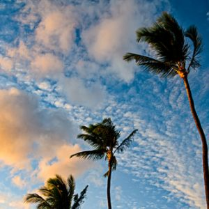 Sunset Palms - Kahana, Maui, Hawai'I | Photography by Pono Images